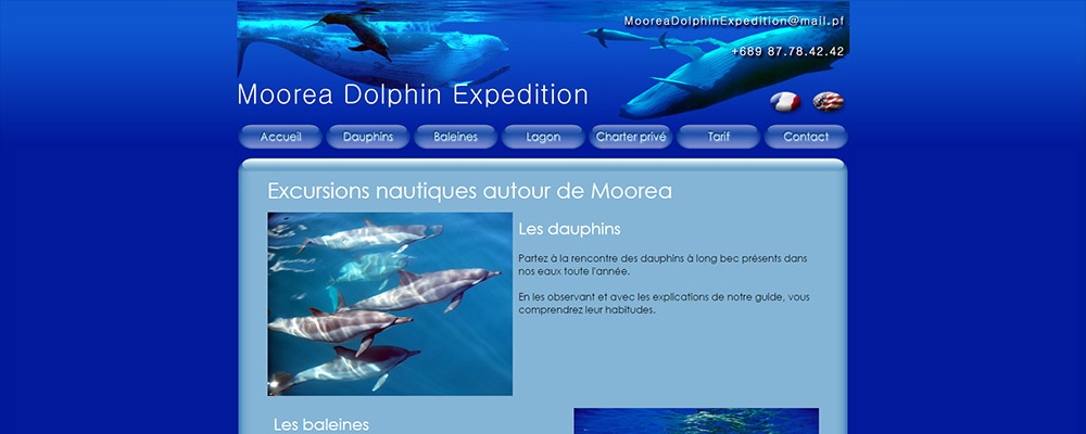 Moorea Dolphin Expedition